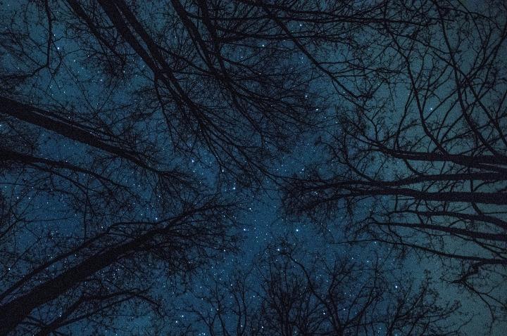 trees-4530057_1920