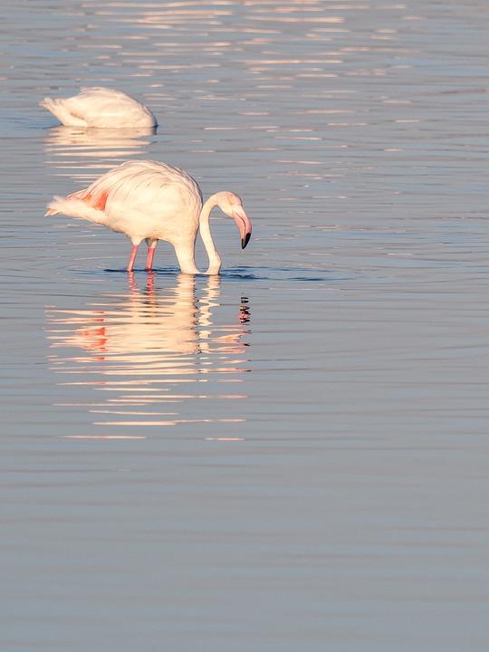 flamingo-3604983_960_720